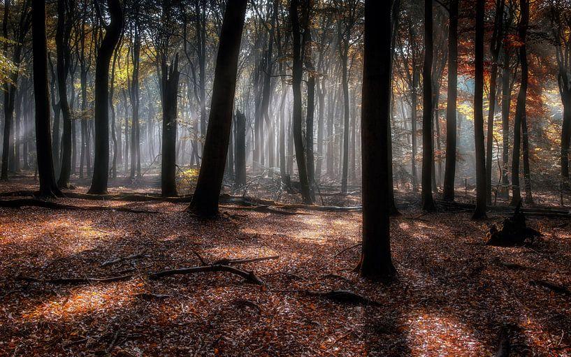 Autumn Diaries V von Em We
