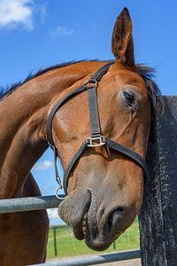 Als paarden konden praten