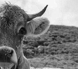 schwarz-weiße Kuh von Marieke Funke