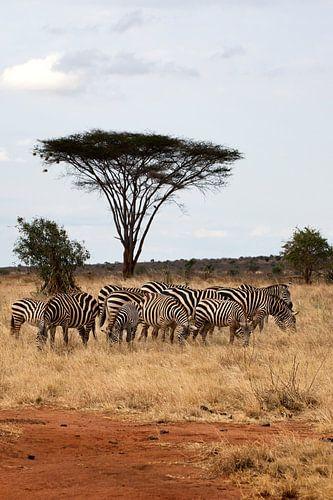 Zebra's van