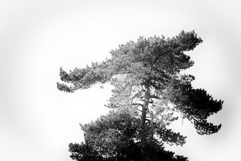 Baum in Schwarz und Weiß von Steven Dijkshoorn