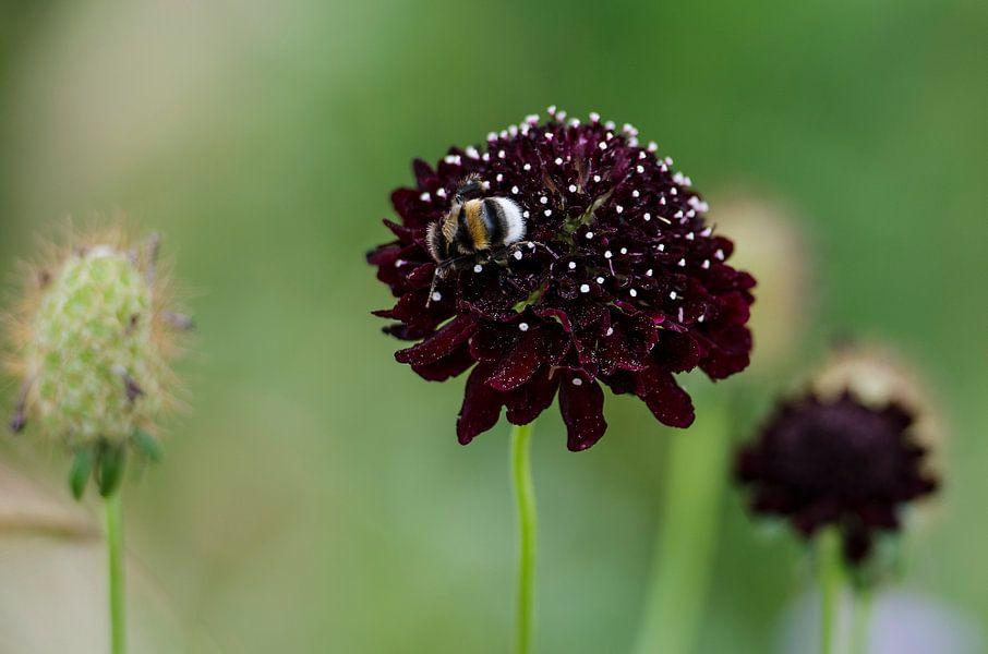 bij op paarse plant