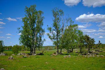 Schwedische Landschaft 154 von Geertjan Plooijer