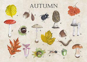 Herbst von Jasper de Ruiter
