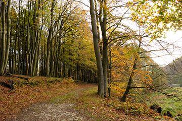 In het Nationaal Park van Ostsee Bilder