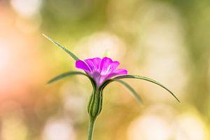 Flowerful sur William Mevissen