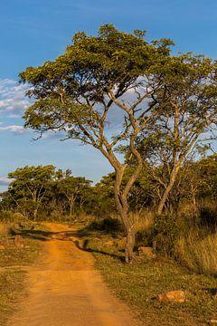 Safari track van
