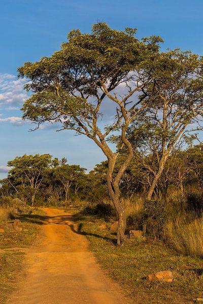 Safari track van Peter Leenen