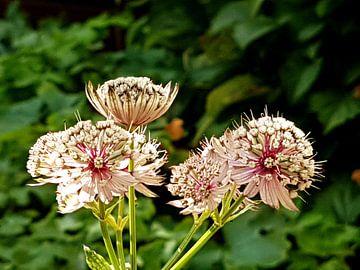 bloemen van Joelle van Buren