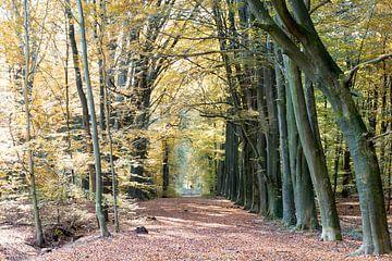 Herfst laan van Robert de Jong