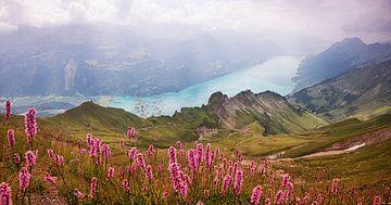 Uitzicht op het Brienz-meer vanaf de Rothoorn, knoopweide van Susanne Bauernfeind