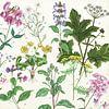 Wilde planten van Jasper de Ruiter thumbnail