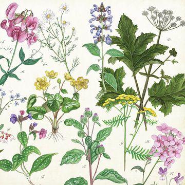 Wildpflanzen von Jasper de Ruiter