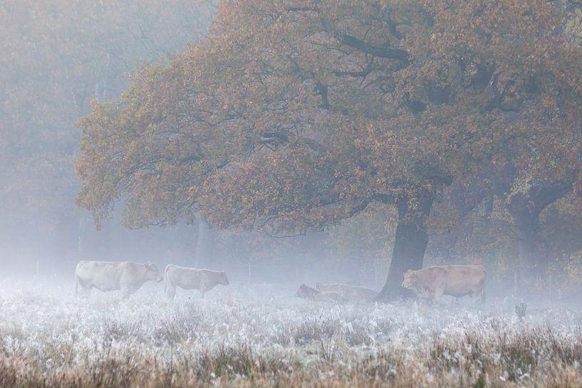 Landelijk tafereel  met koeien onder eik van Karla Leeftink