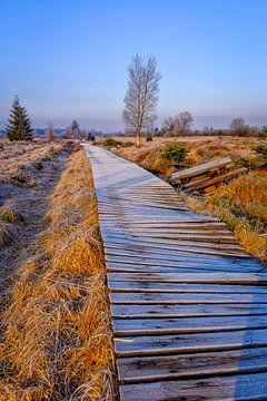 Holzfußweg in Hove Venen von Johan Vanbockryck