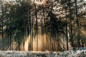 Zonsopkomst in de bossen van Bas Fransen