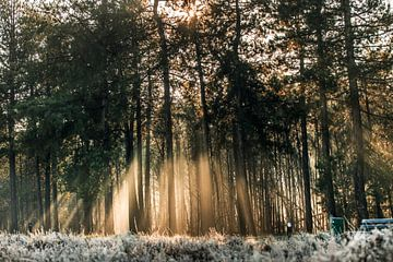 Sonnenaufgang im Wald von Bas Fransen