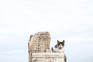 Cat on ornament van Mark Mooren