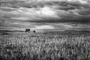 Elephants in a vast landscape