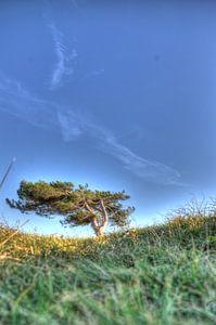 De eenzame boom van Rodney Hooijman
