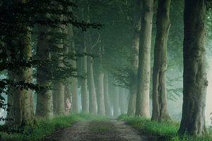 Mistige morgen in het bos