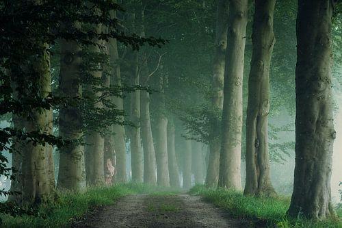 Mistige morgen in het bos van Martin Podt
