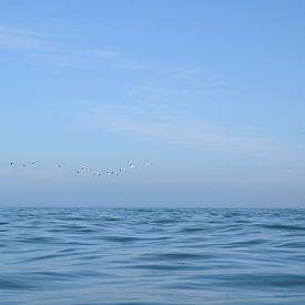 Seevögel fliegen vor der Küste von Wales, UK von Christa Stroo fotografie