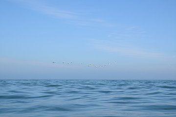 Seevögel fliegen vor der Küste von Wales, UK