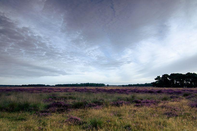 Strabrechtse Heide 120 van Desh amer