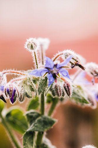 Paarse bloem in de ochtend dauw