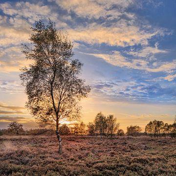 Orange Sonnenuntergang mit dramatischen Wolken und Birke tree_2 von Tony Vingerhoets