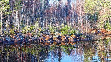 Natuurgebied in spiegelbeeld von Fields Sweden