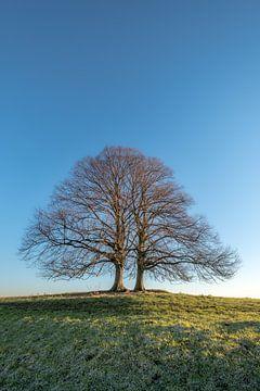 Twee bomen of 1 boom? von Moetwil en van Dijk - Fotografie
