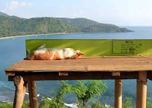 Slapen als een  .... kat