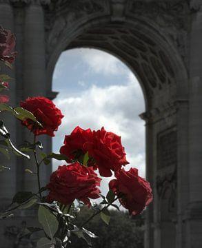 Rode rozen van J Y