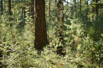 Bos met tegenlicht van Merijn van der Vliet