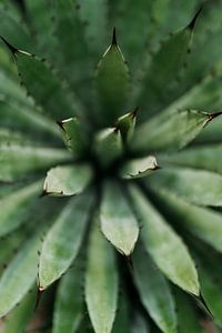 Cactus close-up