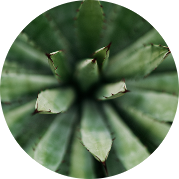 Cactus close-up van Wianda Bongen