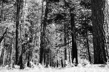Bomen in Yosemite Park van erik driessen