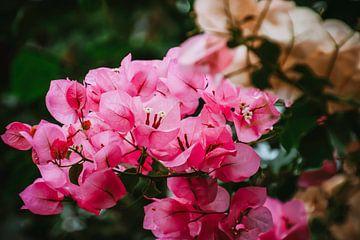 Orchidee aan de muur von Stedom Fotografie