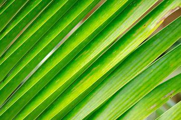 Palmblad op Koh Chang in Thailand van Sven Wildschut