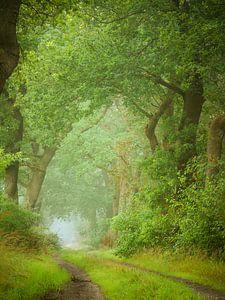 Grüne Blätter von Mark van der Walle