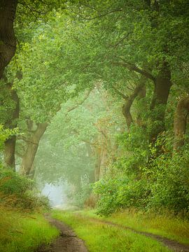 Green leaves van Mark van der Walle