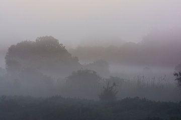 zonsopkomst in een mistig Kromslootpark von Bianca Fortuin