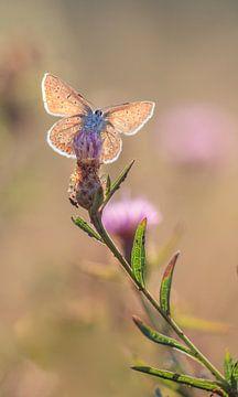 Butterfly von Lisa Kompier