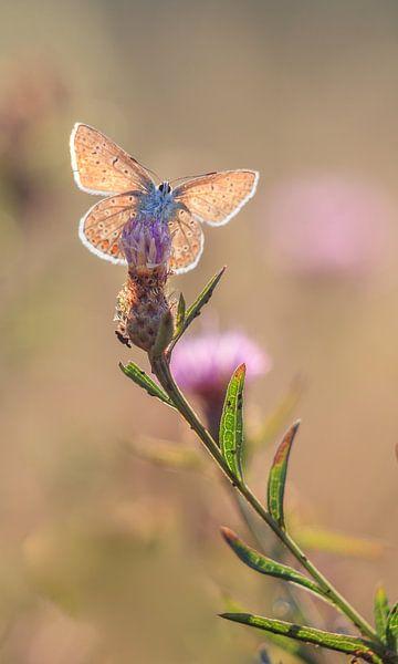 Butterfly van Lisa Kompier