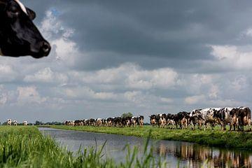 Koeien in Nederlands Landschap van Els Korsten