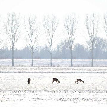 Hirsche in holländischer Winterlandschaft von Thomas Thiemann