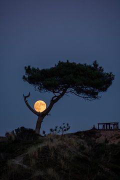 moon rise van Marjolein van Roosmalen