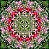 Nenúfares Rosados van Frans Blok thumbnail